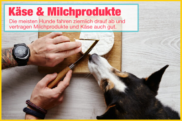 Hundeeis mit Milch und Käse