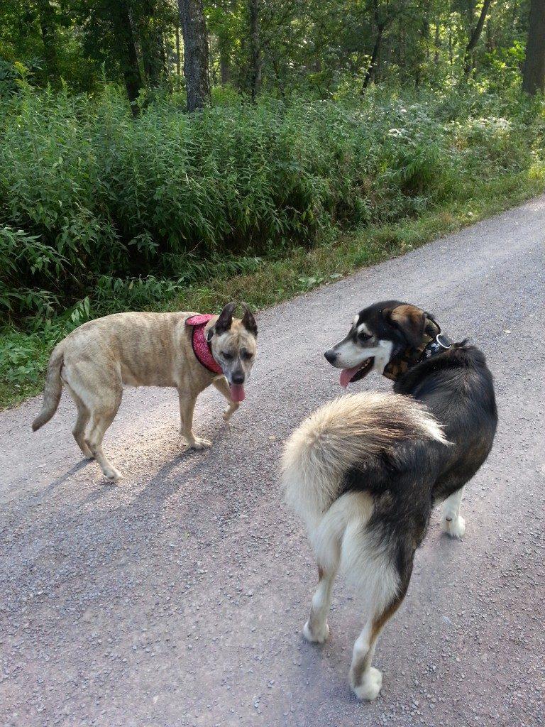 Meine Hunde sind mit Kühlhalsband im Sommer unterwegs