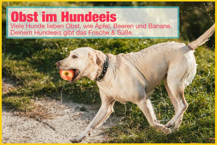 Obst und Früchte im Hundeeis
