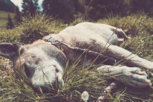 Abkühlung und Kühlmatten für Hunde