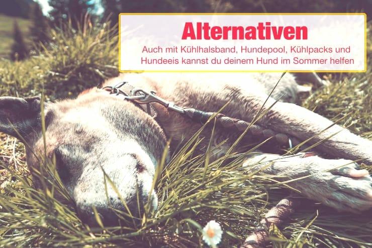 Alternativen zur Kühlmatte für Hunde