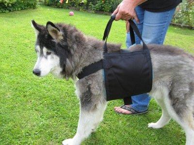 Beppo Hunde Tragegurt und Gehhilfe