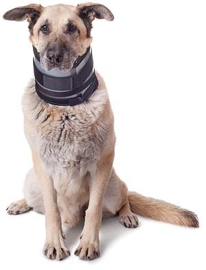 Ejay-Bite-Free-Halskrause für Hunde