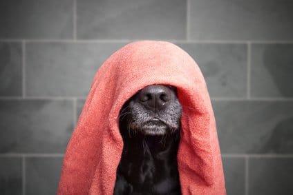 Fell und Haut Pflege für den inkontinenten Hund