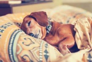 Heizmatte Heizdecke für Hunde