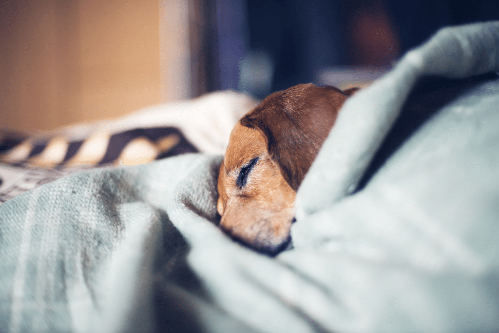 Hundebetten für alte und kranke Hunde