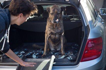 Hunderampe für Hund mit Arthrose