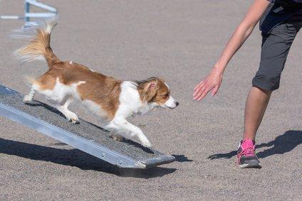 Hunderampe - Üben mit jungen Hunden