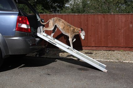 Hunderampe für alte und kranke Hunde