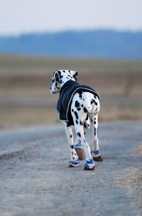 Hundeschuhe und Pfotenschutz für Hunde