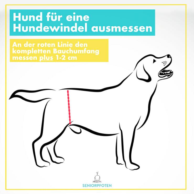 Hundewindel richtig ausmessen
