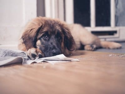 Matten für den Hund mit Inkontinenz