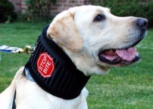 Stop Bite Halskrause für Hunde