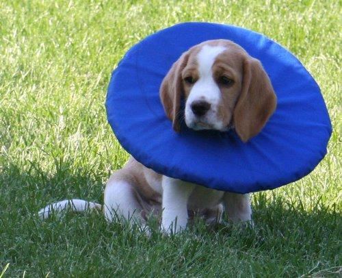 Tepaw Halskragen für Hunde