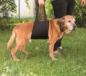 Walkabelly Tragehilfe Gehhilfe für grosse Hunde