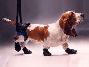 Walkabout Hunde Gehhilfe Tragehilfe Hinten