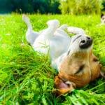10 Tipps wie dein Hund fit durch den Sommer kommt