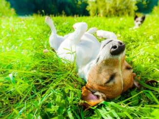 Hund im Sommer