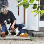 Hunden helfen – Mit Herz, Swiss Ranch und Pfötchenasyl!