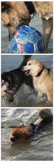 hunde-am-see-im-sommer-strand