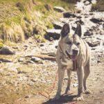 Wanderurlaub mit Arthrose-Hund – kann man das machen?