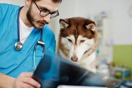 Arthrose-beim-Tierarzt-abklären