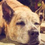 Anpassungen und Hilfen im Alltag für Arthrose-Hunde