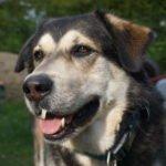 Arthrose beim Hund vorbeugen – das kannst du für deinen Hund tun