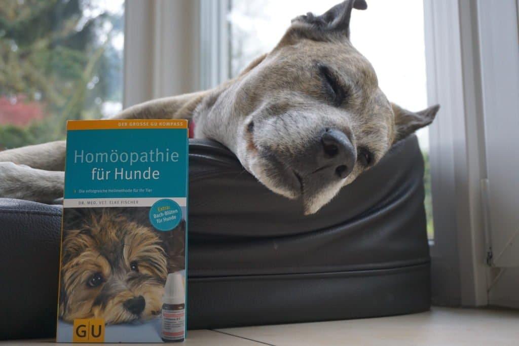 Buch Homöopathie für Hunde