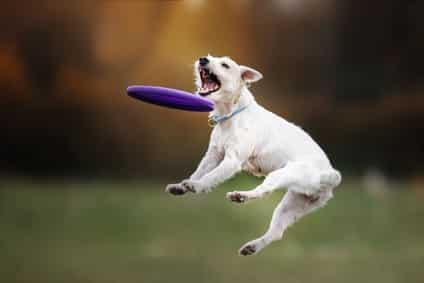 Gelenk-Belastung-Hund
