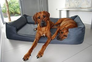 Goofy Ortho Visco orthopädisches Hundebett