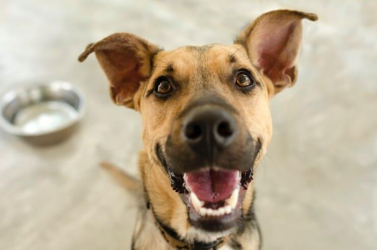 Gruenluppmuschelpulver Hund