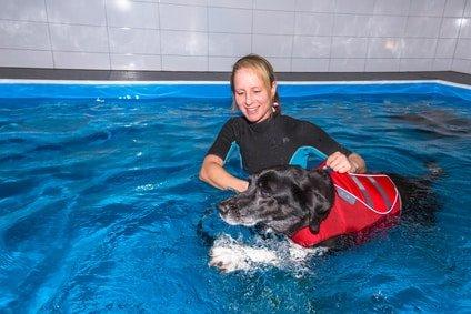 Muskelaufbau-beim-Hund-durch-schwimmen