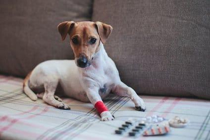 Mit Zeel kannst du eine homöopathische Langzeittherapie gegen Arthrose-Schmerzen und Entzündungen bei deinem Hund durchführen.