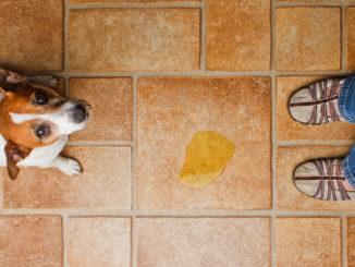 Inkontinenz bei Hunden Urin und Stuhlgang