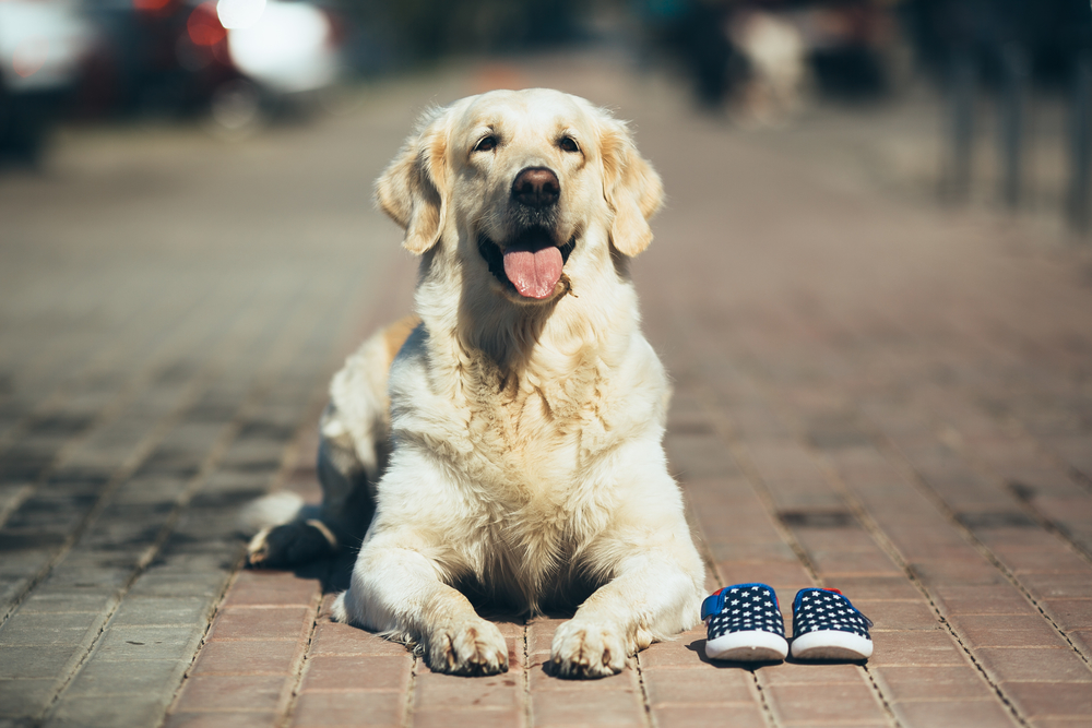 Hundeschuhe und Pfotenschutz