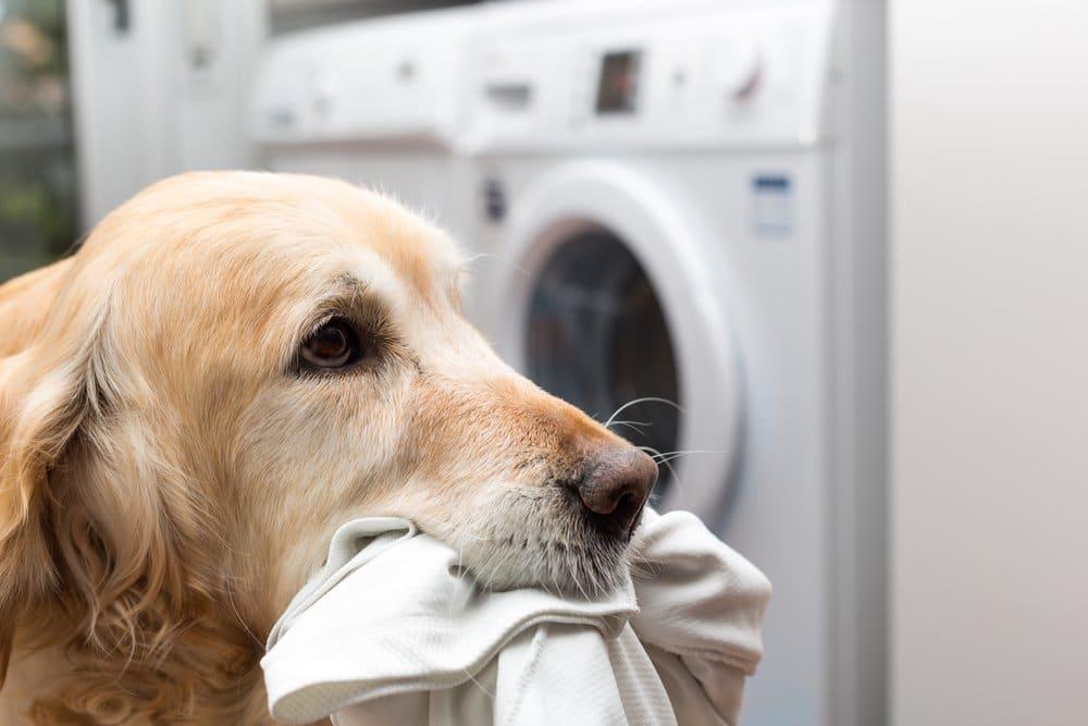 Waschbare Hundewindeln in der Waschmaschine reinigen