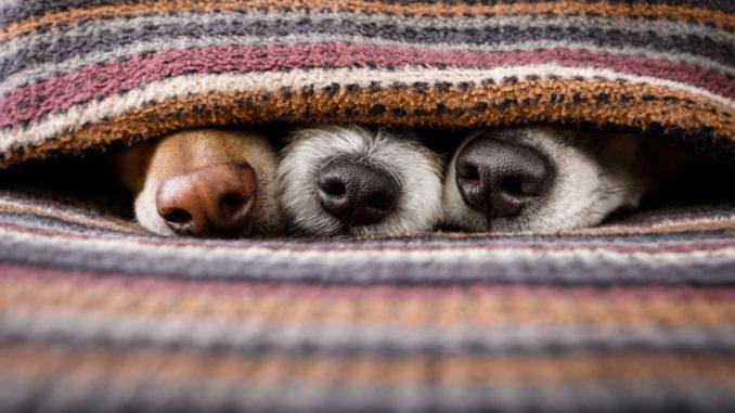 Hundematten Rutschfest Wärmend Kühlend