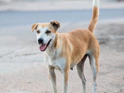 Teufelskralle für Hunde mit Arthrose