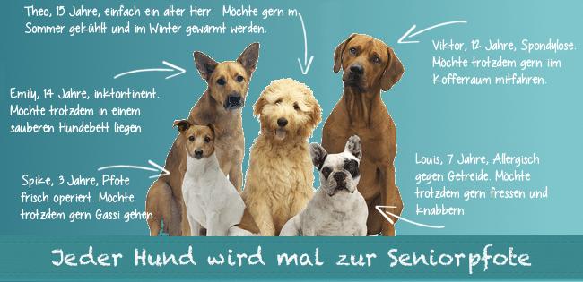 Seniorpfoten.de - alte und kranke Hunde