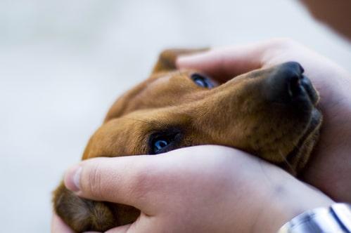 Entspannung mit der Beruhigungsweste für Hunde