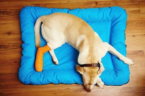 Hilfe für Hunde bei Wunden und Verletzungen