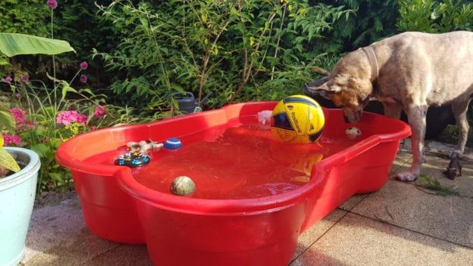 Hund spielt im hundepool in Knochenform
