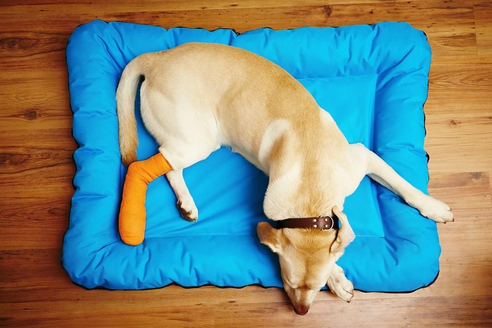 Pflaster und Wundverband für Hunde