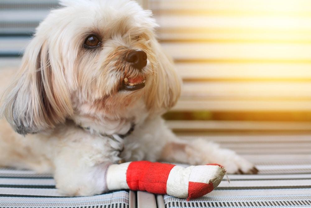 Pfotenwundschutz Hund
