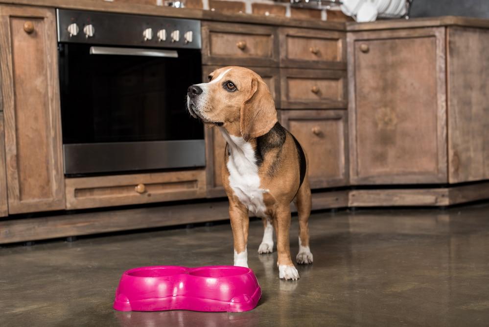 Tabletten im Hundefutter verstecken
