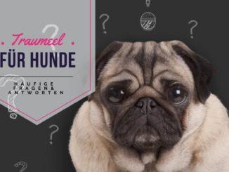Fragen zu Traumeel für Hunde