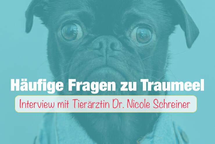Fragen_Traumeel_Hunde