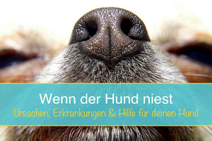 Hund Niest Ursachen Krankheitsanzeichen Hilfe Seniorpfoten