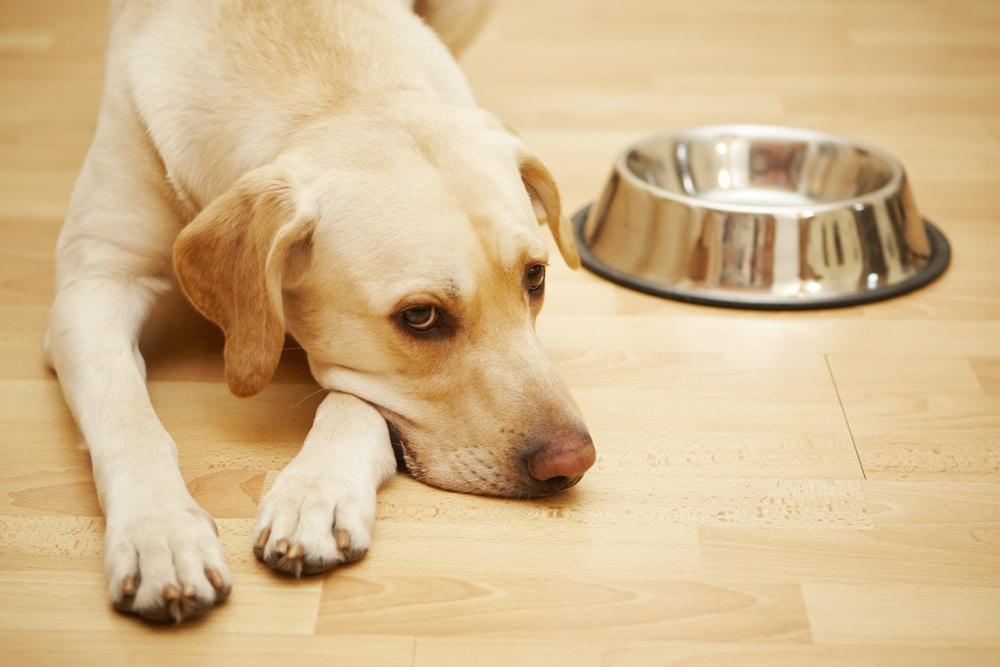 Hund mit Hilfe der Tiertafel versorgen